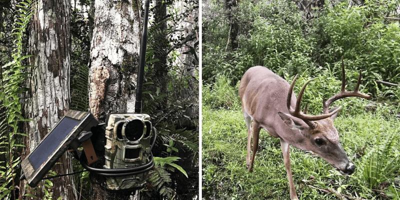 La mejor tarjeta SD para cámara Trail